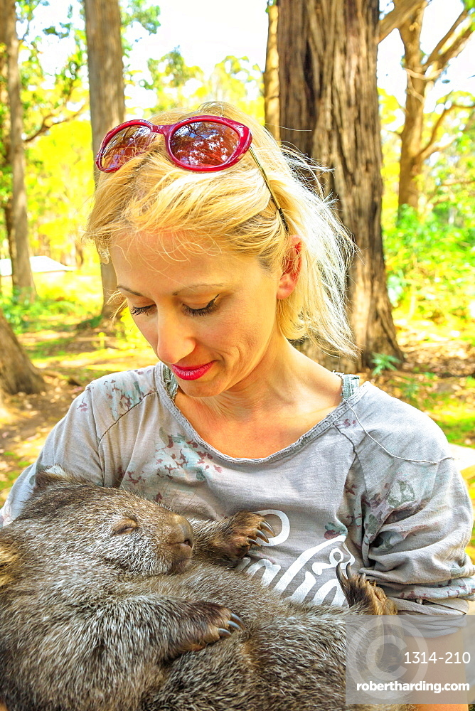 Blonde caucasian tourist woman holding a cute wombat sleeping in marsupial position. Encounter with Australian marsupial animal in Tasmania, Australia. Trees and forest on blurred background.