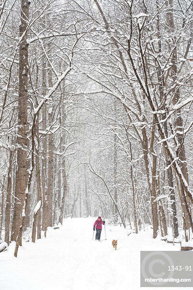 Jennifer Jordan and dog Jack cross country ski the Berma Road near Potomac, Maryland, United States of America, North America