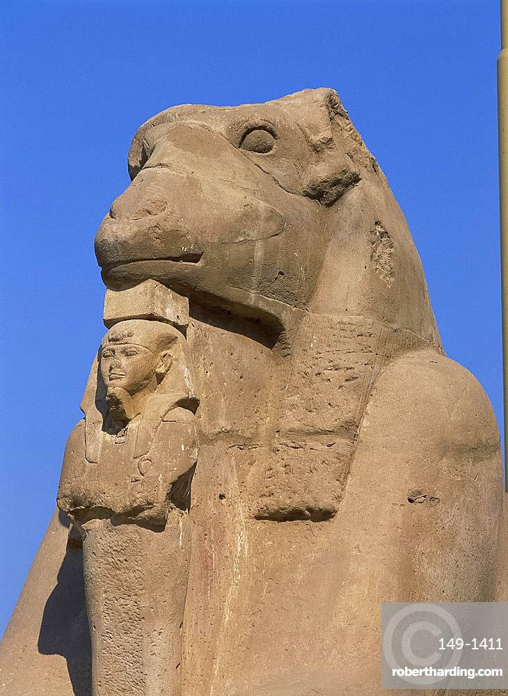 Close-up of a ram-headed sphinx of the Processional Avenue, at the Temple of Karnak, Thebes, UNESCO World Heritage Site, Egypt, North Africa, Africa