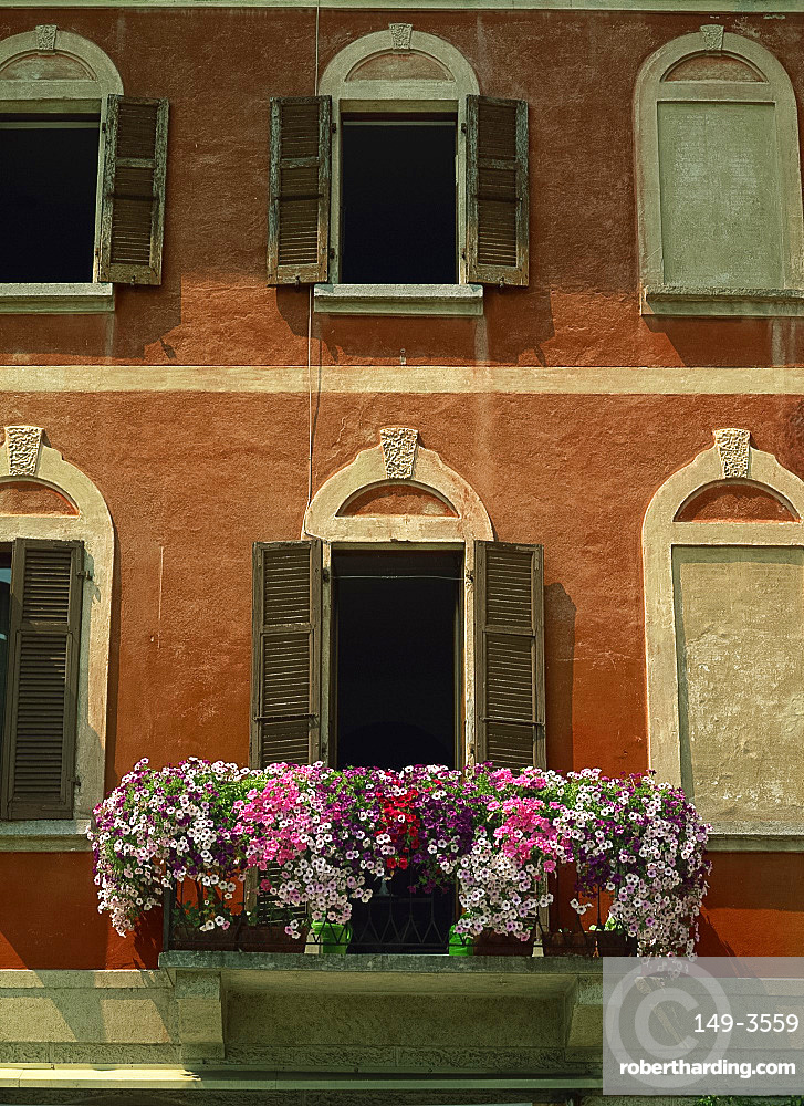 Close-up of petunias on a balcony of a house in Morcote, on Lake Lugano, Ticino, Switzerland, Europe