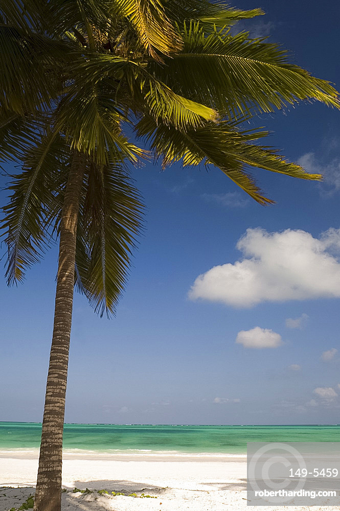 A palm tree over a white sand beach and emerald sea on the edge of the Indian Ocean, Paje, Zanzibar, Tanzania, East Africa, Africa