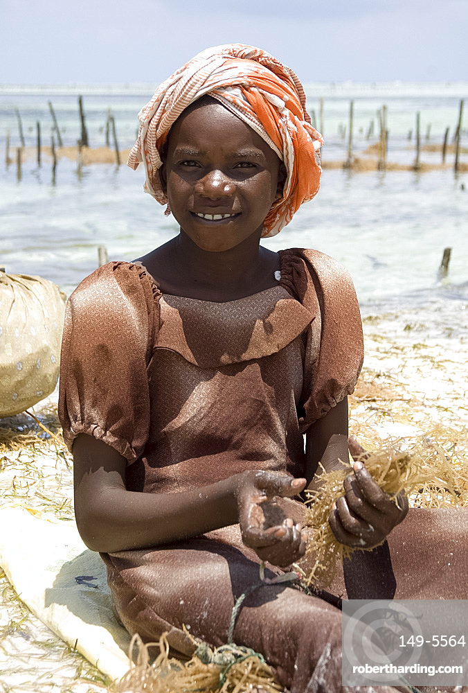 A young girl in a colourful headscarf harvesting seaweed, Paje, Zanzibar, Tanzania, East Africa, Africa