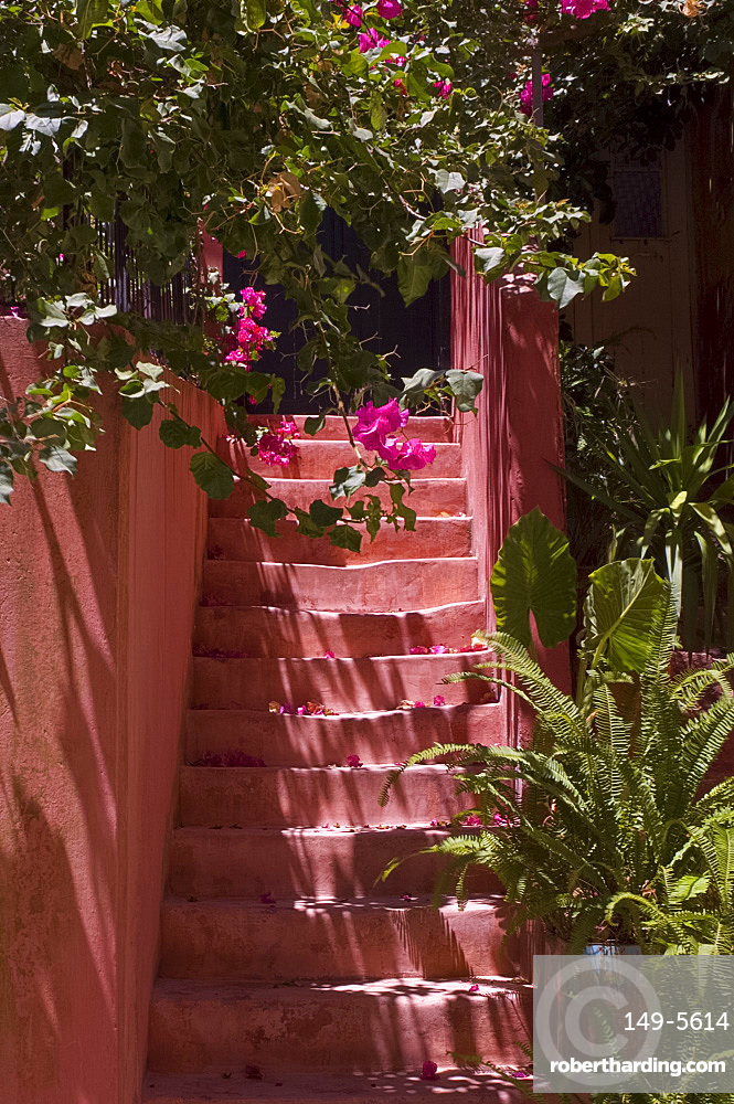 Colourful pink steps and bougainvillea in the old section of Hania, Crete, Greek Islands, Greece, Europe