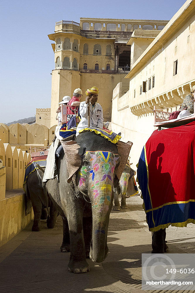 Elephants carrying tourists to the Amber Fort in Jaipur, Rajasthan, India, Asia