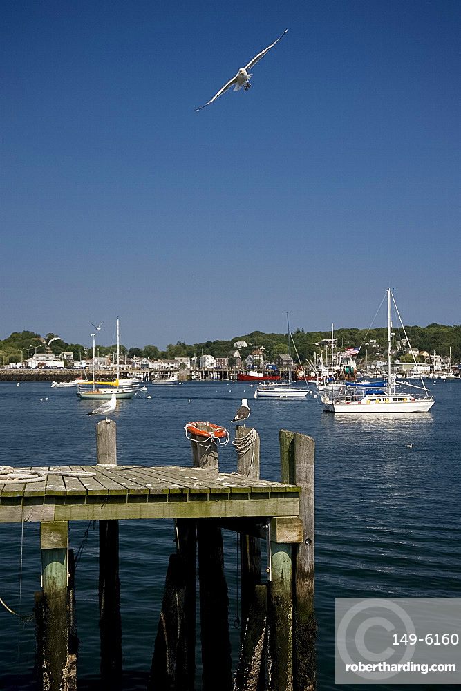 Boats and seagulls in Gloucester Harbor, Gloucester, Massachussetts, New England, United States of America, North America