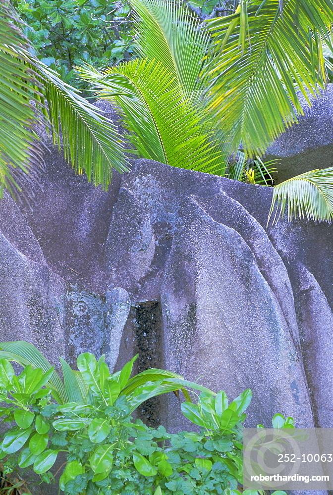 Detail of granite rock and vegetation, La Digue Island, Seychelles, Indian Ocean, Africa