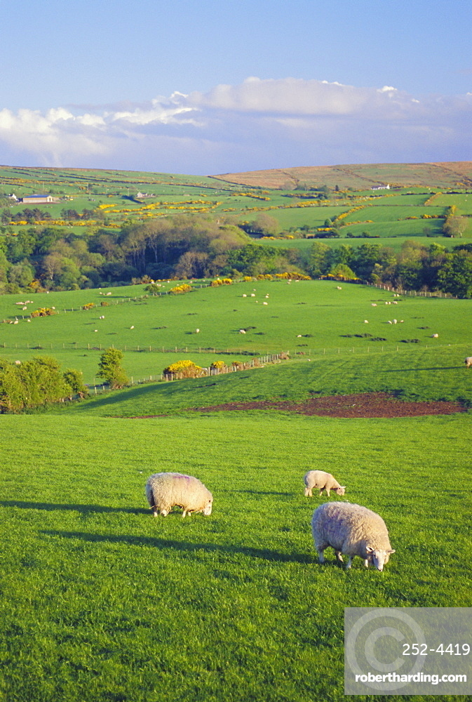 Farming Countryside, County Antrim, Northern Ireland