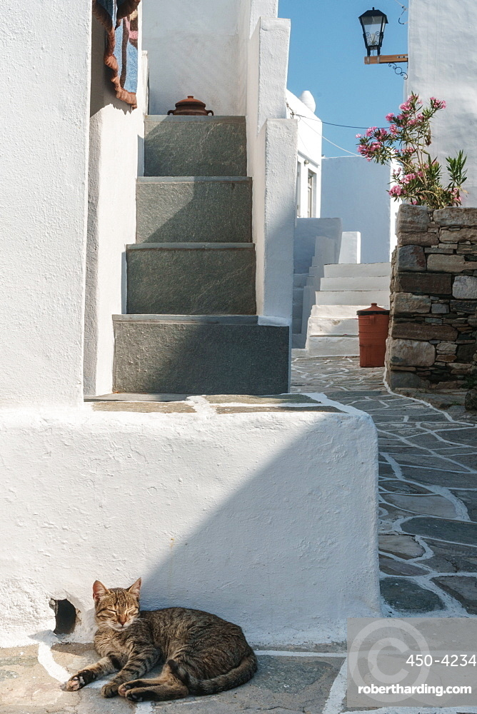Cat basking in the sun by traditional white Greek houses, Kastro Village, Sifnos, Cyclades, Greek Islands, Greece, Europe