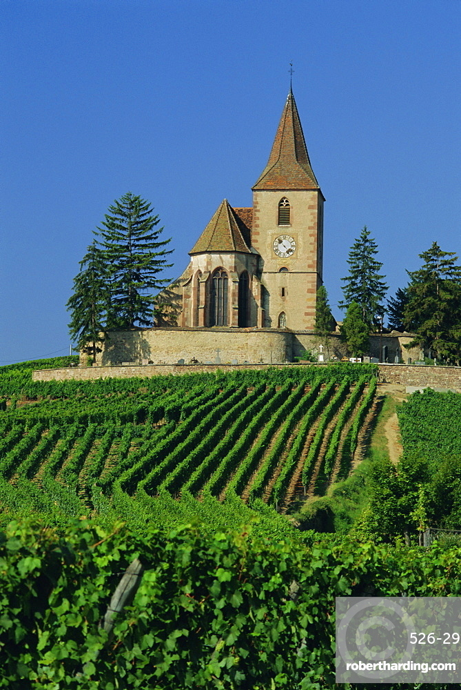 Church and vineyards, Hunawihr, Alsace, France, Europe