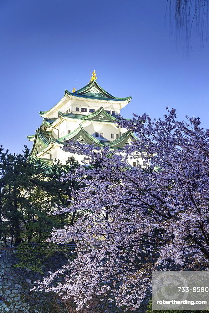 Cherry blossom at Nagoya Castle, Nagoya, Aichi Prefecture, Honshu, Japan, Asia