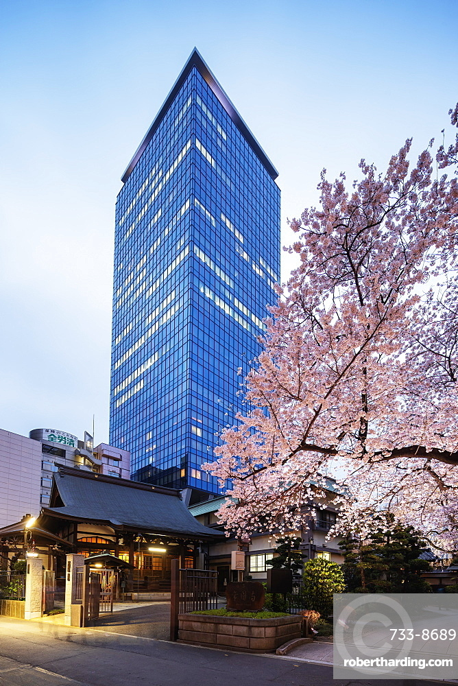 Spring cherry blossoms, Joenji Temple, Shinjuku, Tokyo, Japan, Asia