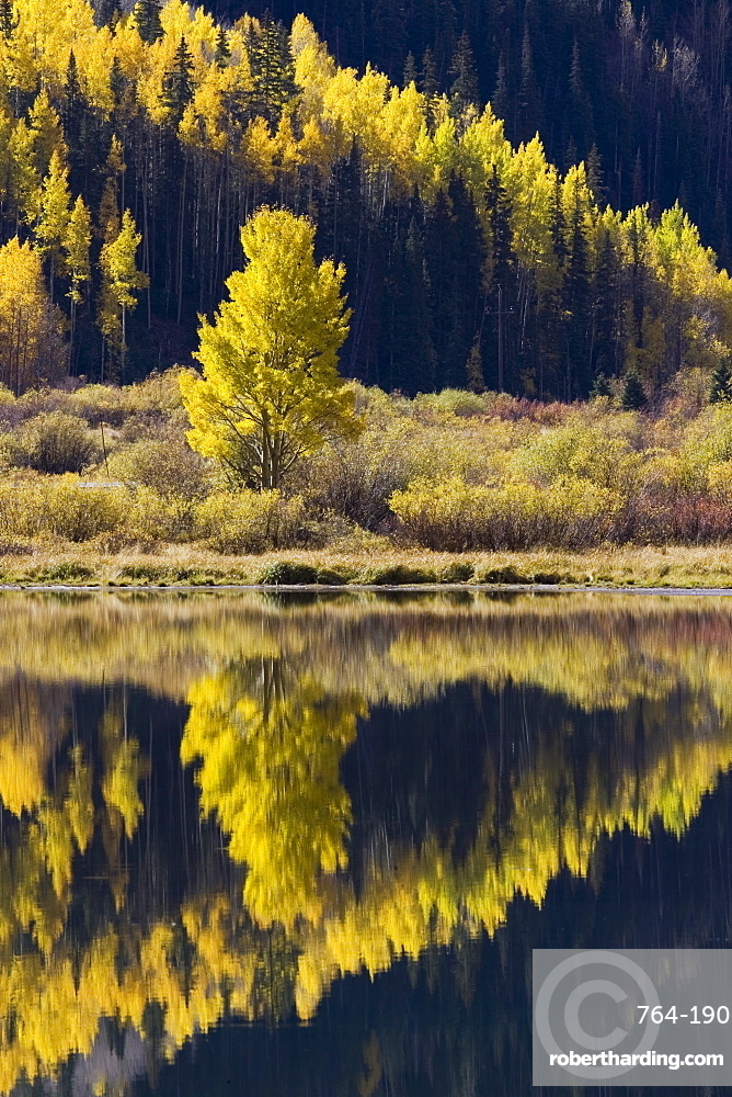 Aspens in fall colors reflected in Crystal Lake, near Ouray, Colorado, United States of America, North America