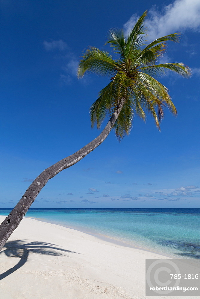A palm tree leaning out to sea and a deserted beach on an island in the Northern Huvadhu Atoll, Maldives, Indian Ocean, Asia