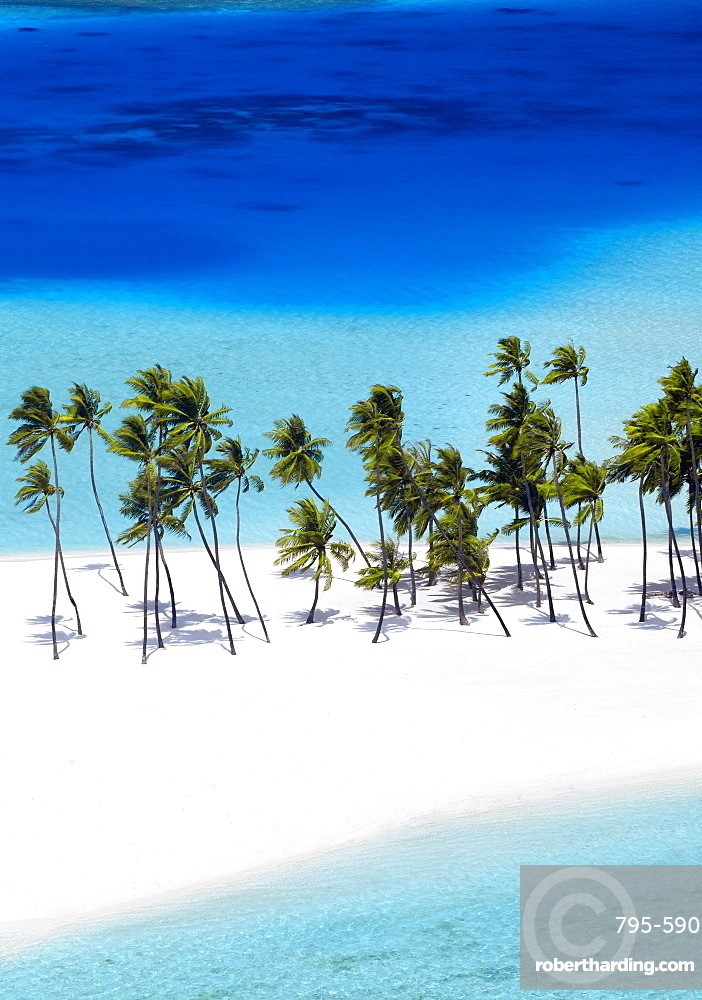 Aerial view of tropical beach and palm trees, The Maldives, Indian Ocean, Asia (Drone)