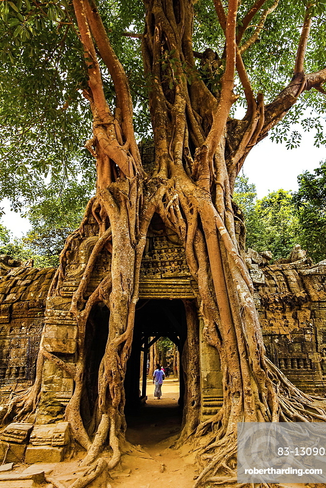 Gopura tower entrance door with lithophyte strangler fig roots, 12th century Ta Som temple, Ta Som, Angkor, UNESCO World Heritage Site, Siem Reap, Cambodia, Indochina, Southeast Asia, Asia