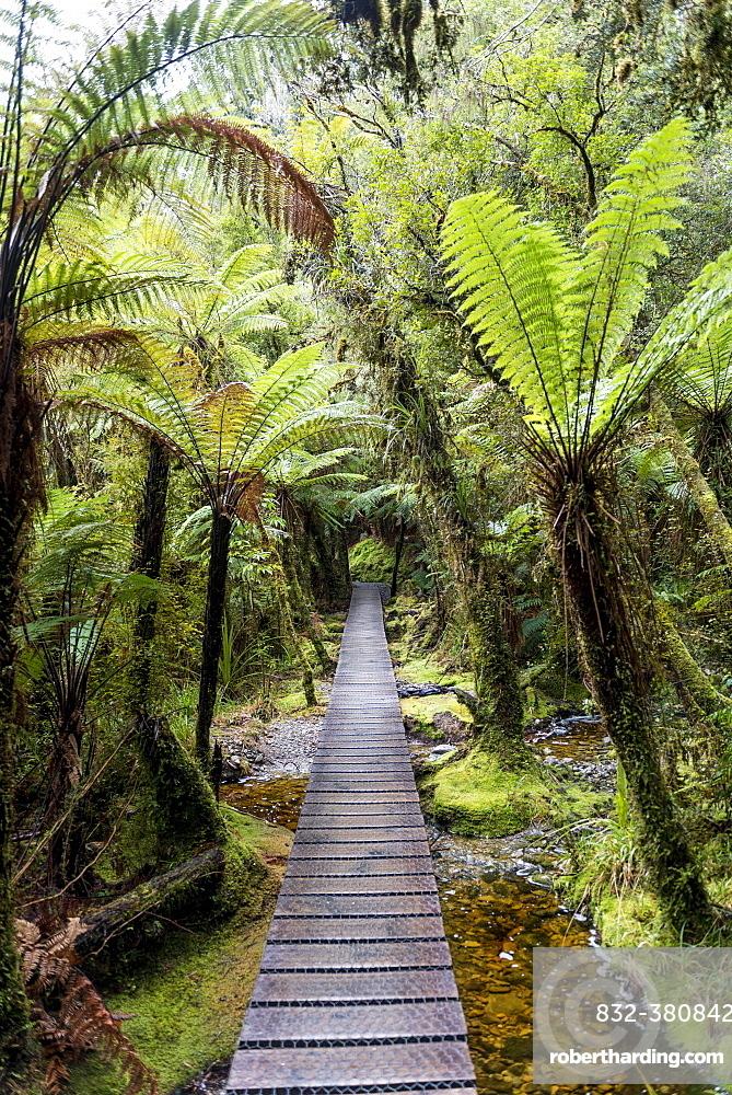 Way through the rainforest on Lake Matheson, Fox Glacier, West Coast, New Zealand, Oceania