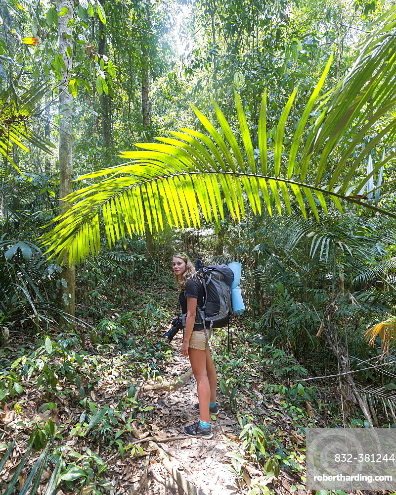 Hiker, young woman walking along a trail in the jungle, Kuala Tahan, Taman Negara National Park, Malaysia, Asia