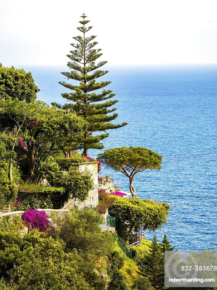 Steep coast with southern vegetation, near Positano, Costiera Amalfitana, Amalfi Coast, Sorrento Peninsula, Campania, Italy, Europe
