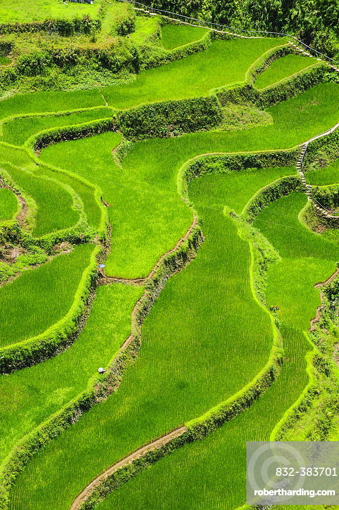 Bangaan in the rice terraces of Banaue, Northern Luzon, Philippines, Asia