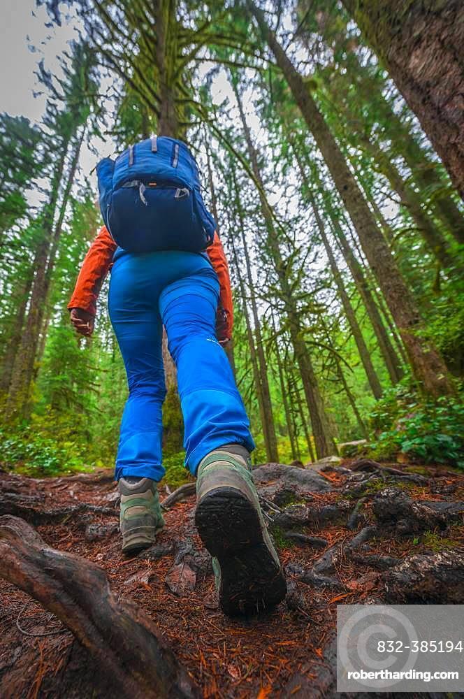 Hiker on a forest path, hiking shoe close-up, Washington, USA, North America