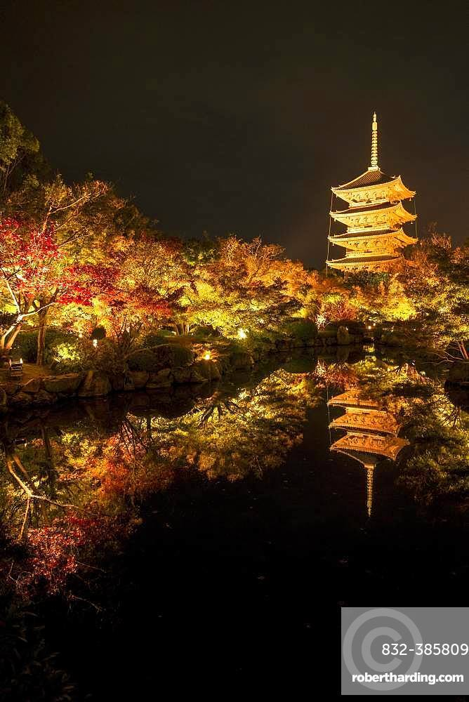 Five-storey pagoda of Toji Temple, illuminated at night for autumn foliage colouring, Kyoto, Japan, Asia