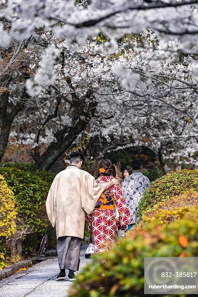 Japanese couple with kimono in a park during the cherry blossom season, colorful traditional clothes, Higashiyama, Kyoto, Japan, Asia