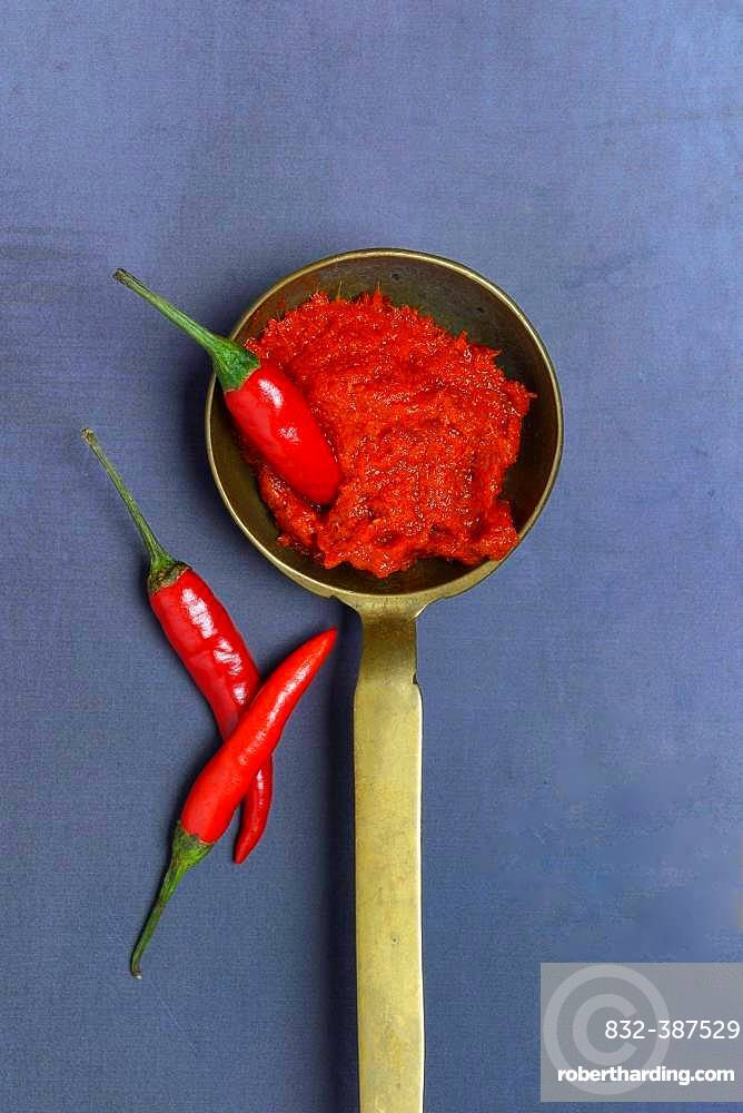 Red Thai curry paste in brass ladle and chilli peppers, Germany, Europe