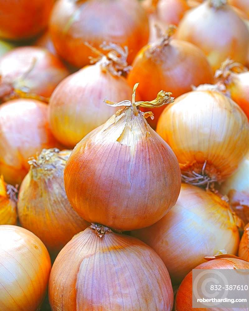 Vegetable onions, Germany, Europe