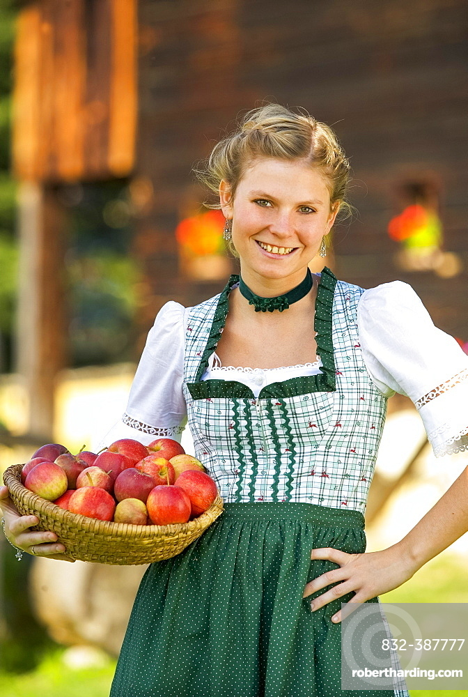 Young woman in dirndl wearing a basket of apples, 19 years, Upper Austria, Austria, Europe