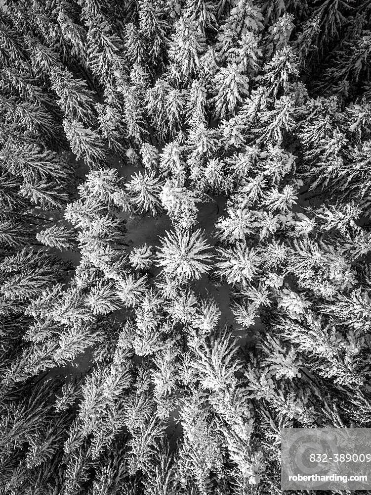 Aerial view, spruce forest in winter, Austria, Europe