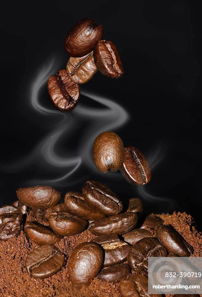 Coffee beans, Arabica coffee (Coffea arabica)