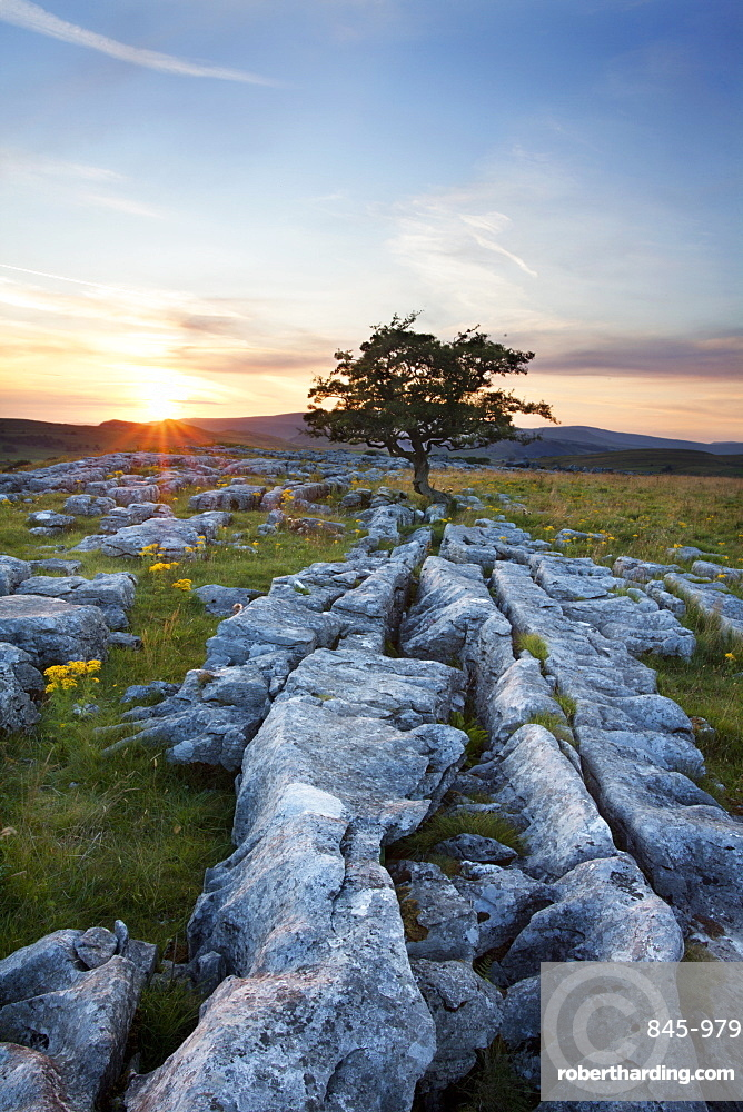 Lone tree and Limestone Pavement at sunset, Settle, Yorkshire, England, United Kingdom, Europe