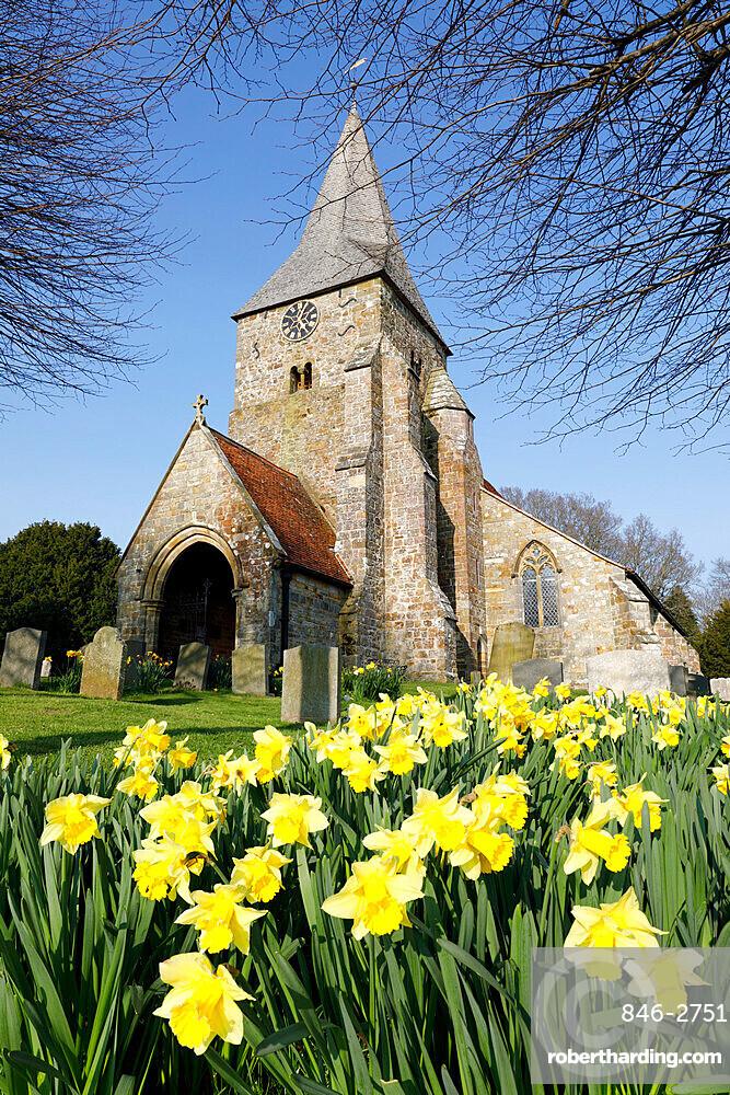 St. Bartholomew's Church with spring daffodils, Burwash, East Sussex, England, United Kingdom, Europe