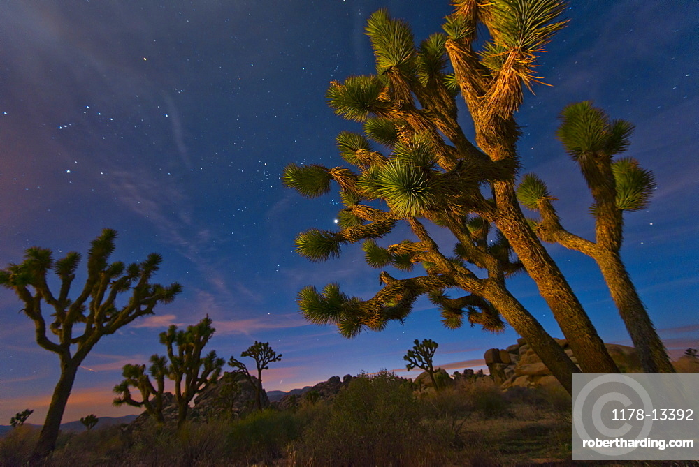 USA, California, Joshua Tree National Park at dusk, USA, California, Joshua Tree National Park