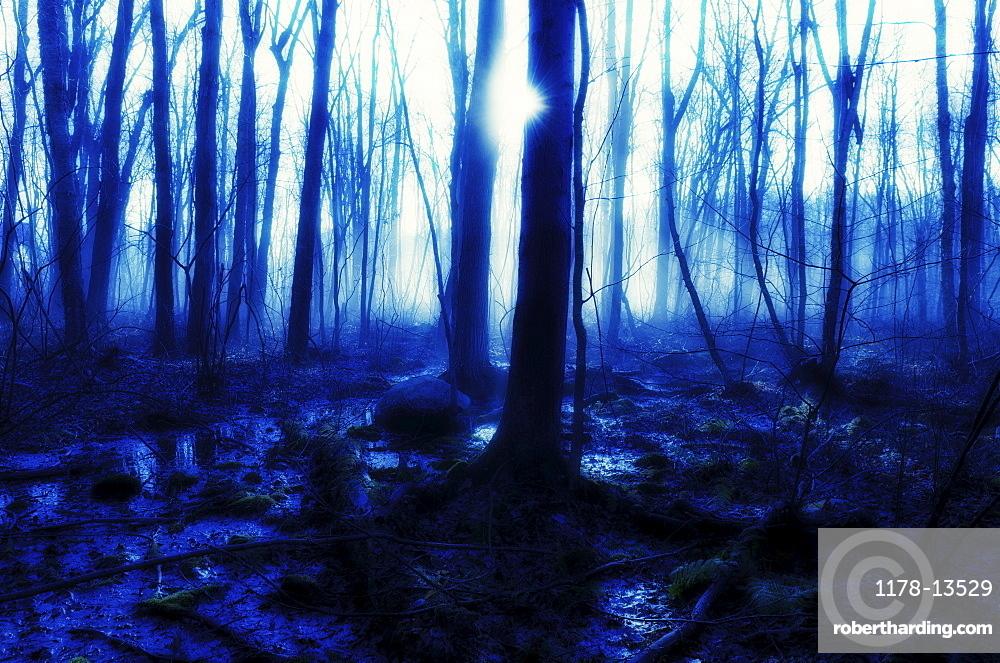USA, Pennsylvania, Poconos, Scenic view of forest