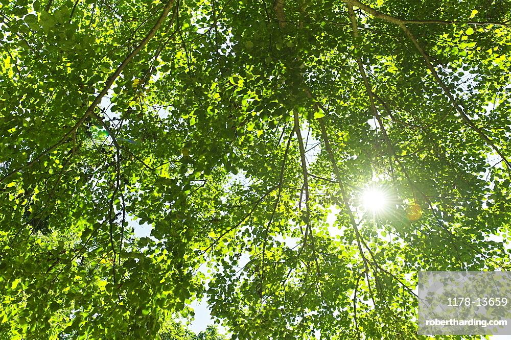 Sun lighting through tree