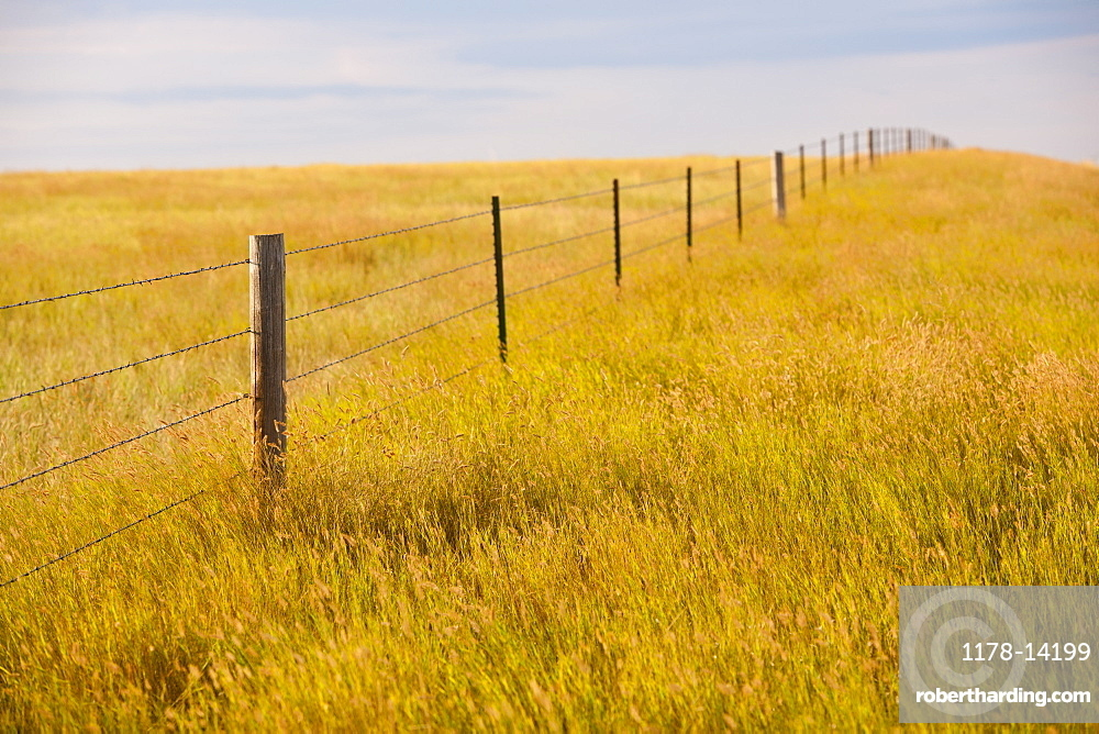 Fence in yellow prairie grass