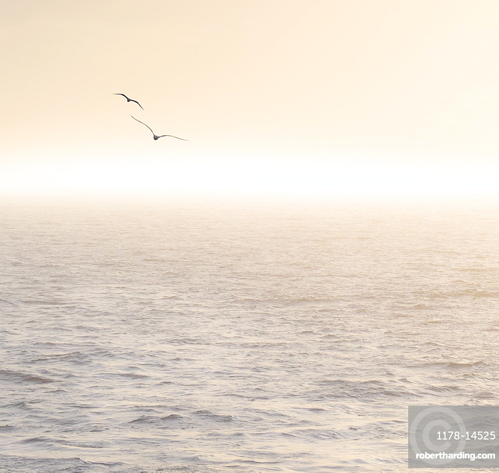 Seagulls flying over Mediterranean sea at sunrise, Mediterranean