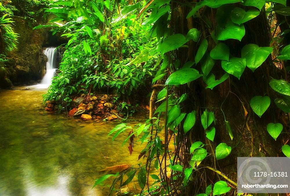 Waterfall in rainforest, Jamaica