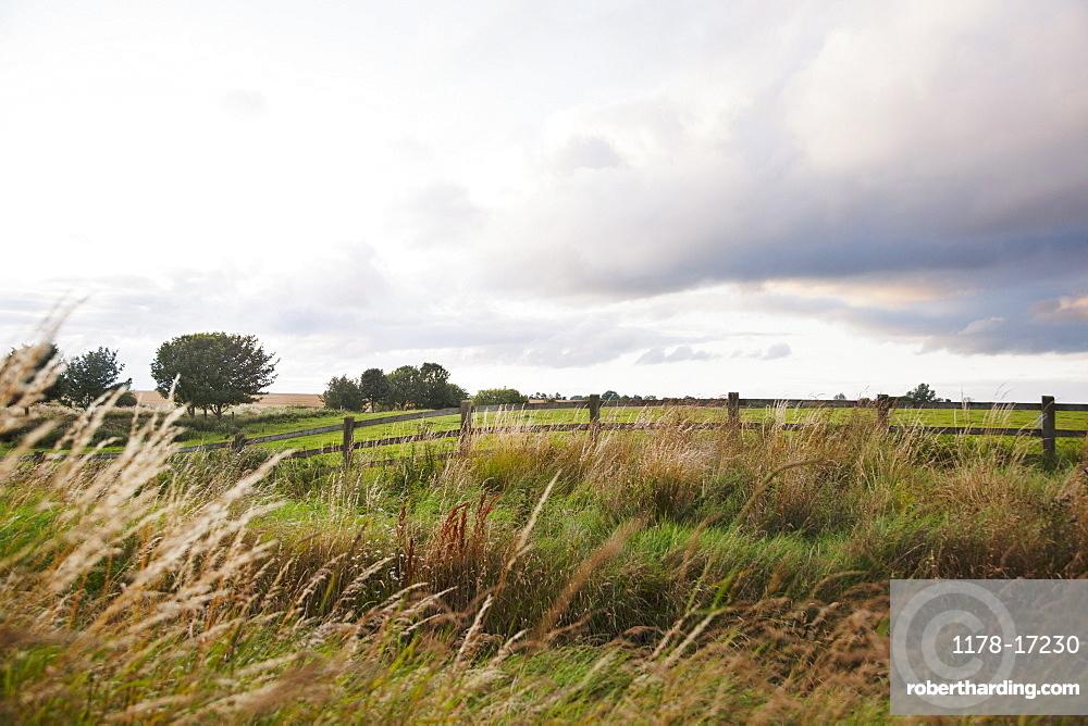 Ireland, County Westmeath, landscape with pasture