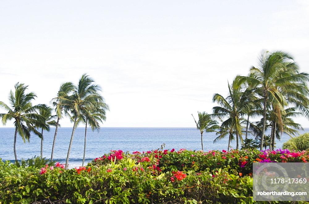 Palm trees on coast, USA, Hawaii, Kauai, Poipu Beach