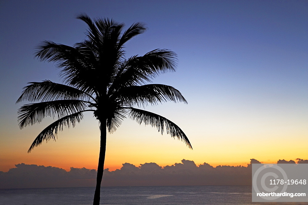 Silhouette of palm tree and ocean