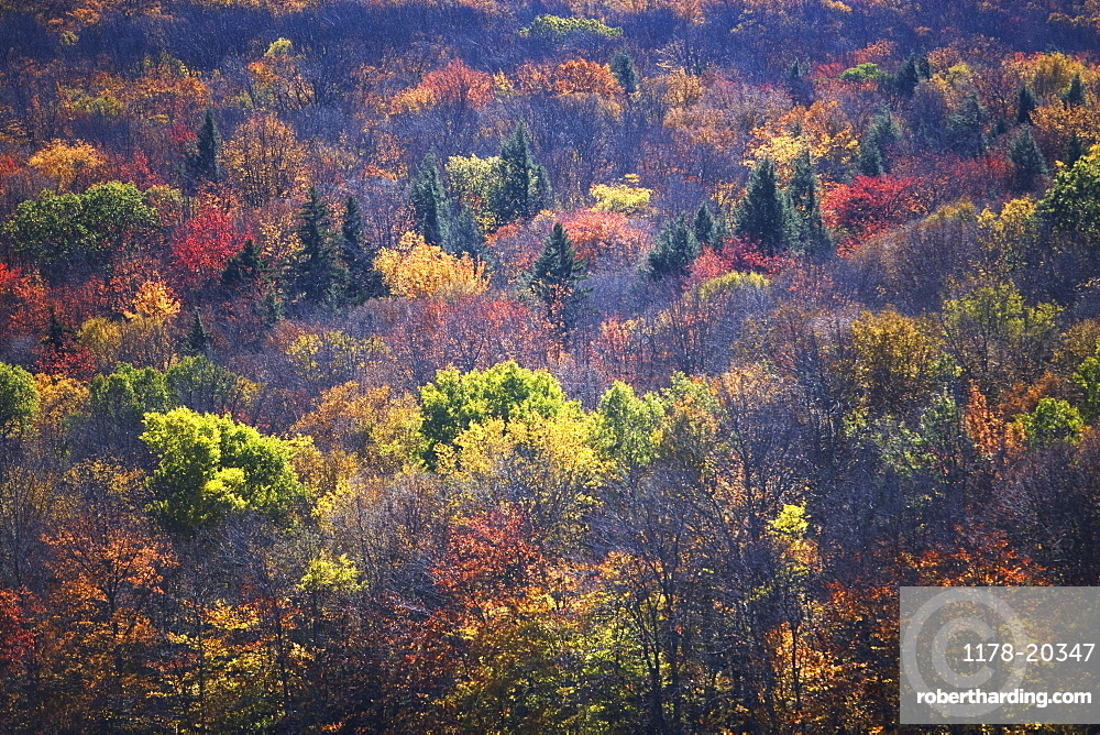 USA, Vermont, high angle view of forest