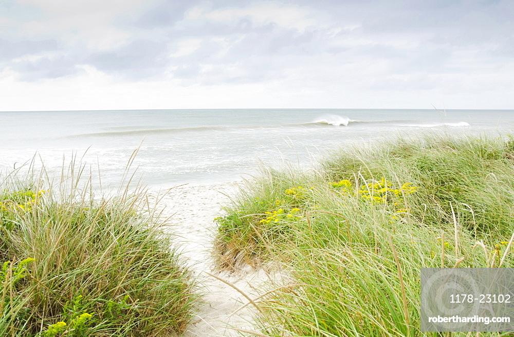 Sandy beach overgrown with marram grass, Nantucket, Massachusetts, USA