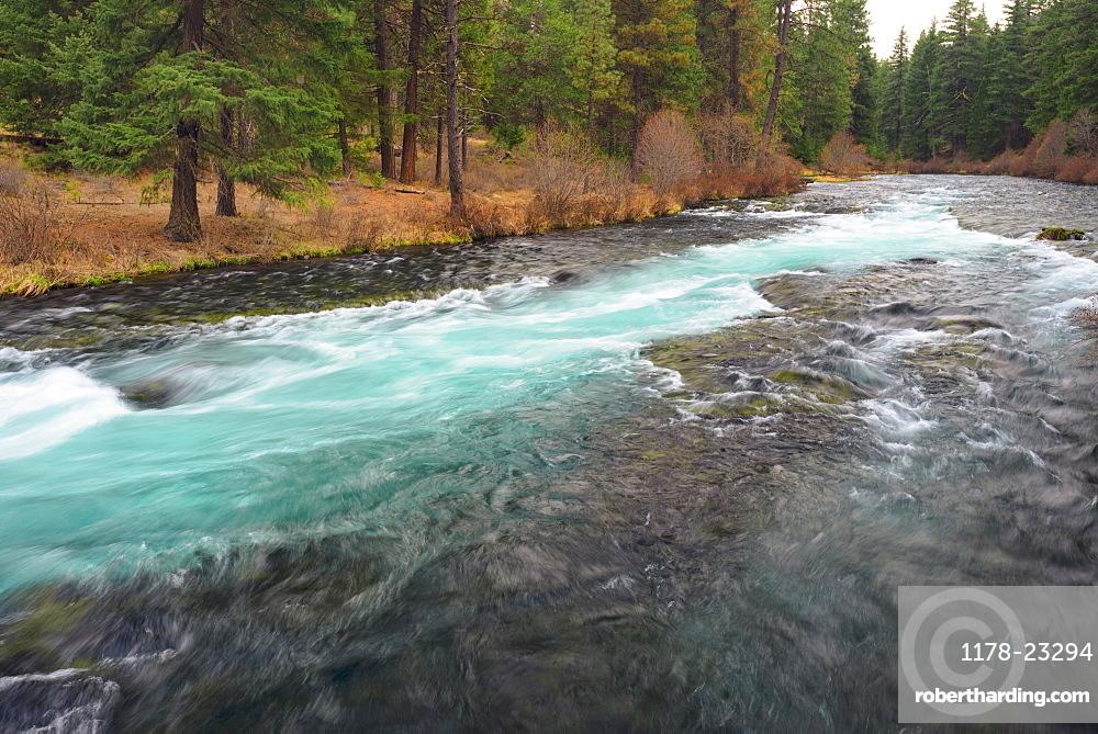 View of wilderness, Metolius River, Metolius River, Oregon, USA