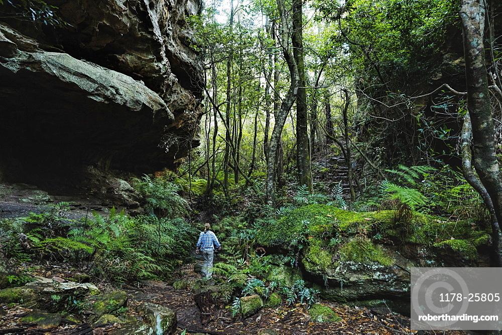 Australia, New South Wales, Blue Mountains National Park, Mature woman walking through mountain rainforest
