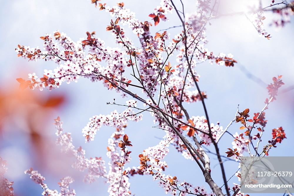 Blossoms com login php www Meet Filipina,