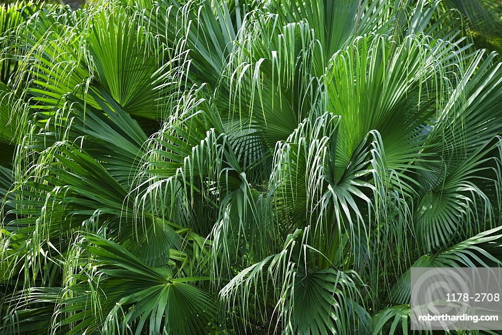 Close up of foliage