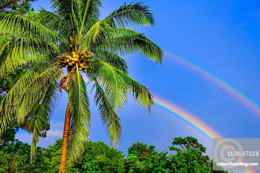 Rainbows over palm trees