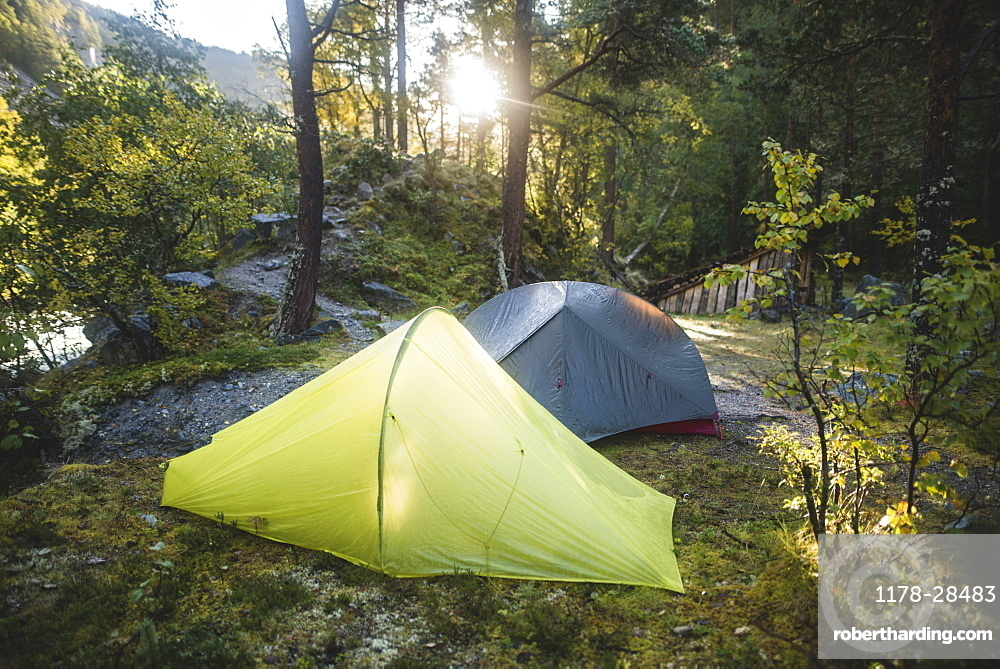Tents in forest